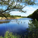 Fotografieren am See in der Natur